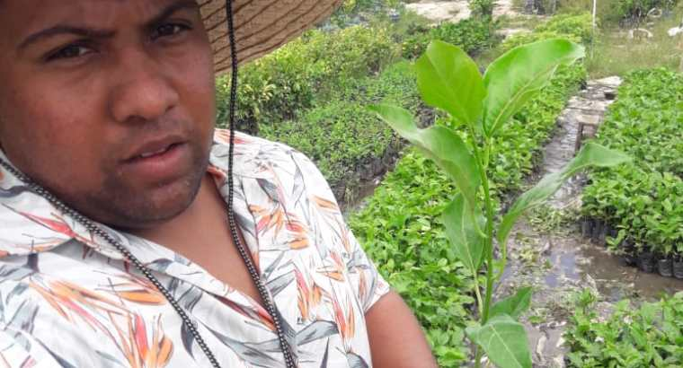 Plantas de chinola