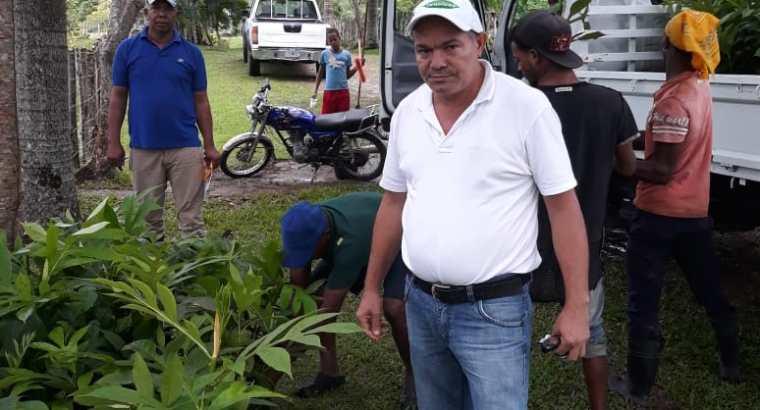 Plantas de castaña