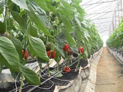 República Dominicana construirá invernaderos para 350 productores desalojados se Constanza