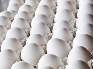 Cartón huevos