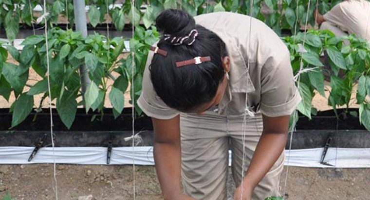 Ingenieros agrónomos, pieza clave para alimentar a la población