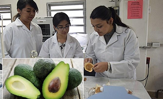 Estudiantes crean biopelícula a partir de la semilla del aguacate, biodegradable en 300 días