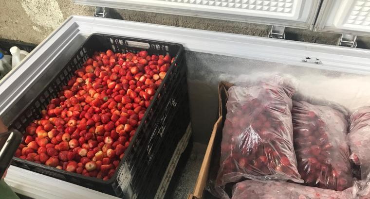Fresas peladas frescas