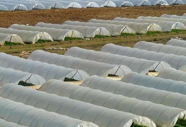 Crean material biodegradable para elaboración de invernaderos