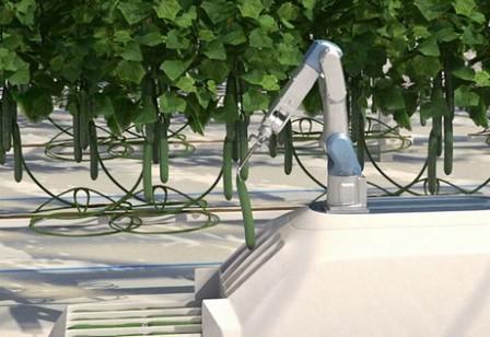 Prevén el lanzamiento de un robot cosechador de pepinos para 2021