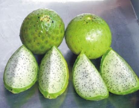Conozca el Sanky, la fruta olvidada de los incas