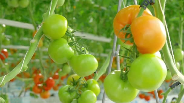 La energía geotérmica se emplea cada más para la producción de hortalizas
