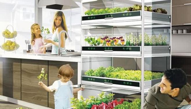 Cultive sus alimentos en casa