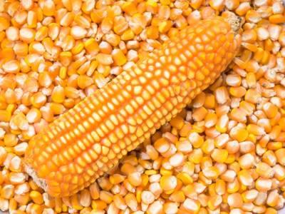 Maiz entero