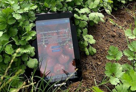 Crean aplicación para asegurar la inocuidad de las hortalizas