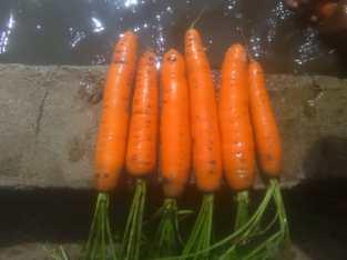 Zanahorias lavadas