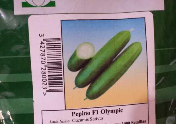 Semillas de pepinos