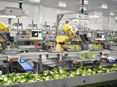 Conozca la producción de lechuga robotizada y automatizada por 24 programadores
