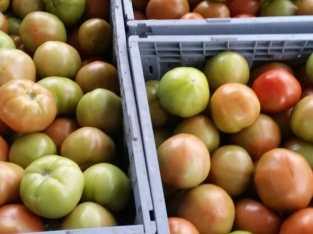 Tenemos tomates