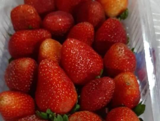 Vendo Fresas al por mayor