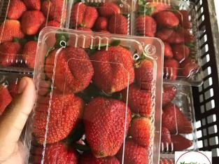 Vendemos Fresas de Ocoa