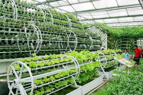 La hidroponía revoluciona la agricultura en Japón