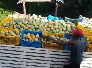 Tenemos más mangos