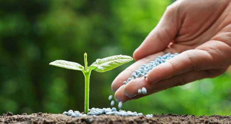 El uso de fertilizantes a base de nitratos disminuiría la huella de carbono en la agricultura