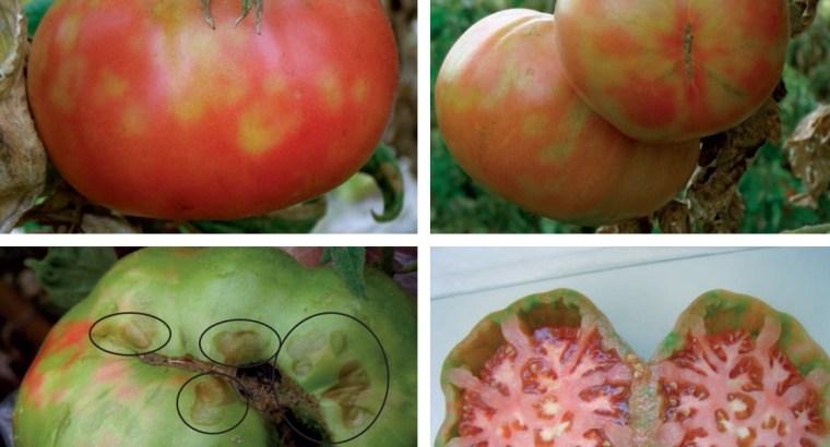 Crean medicina para virus en cultivos