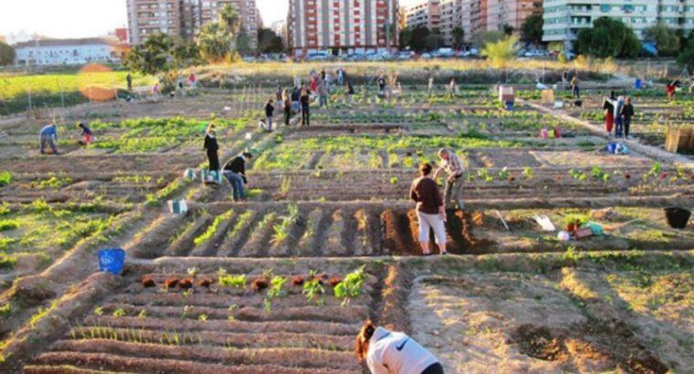 La revolución de los huertos urbanos. Comida gratis y saludable para todos