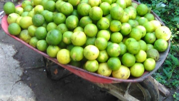 Se vende Limones Chivos