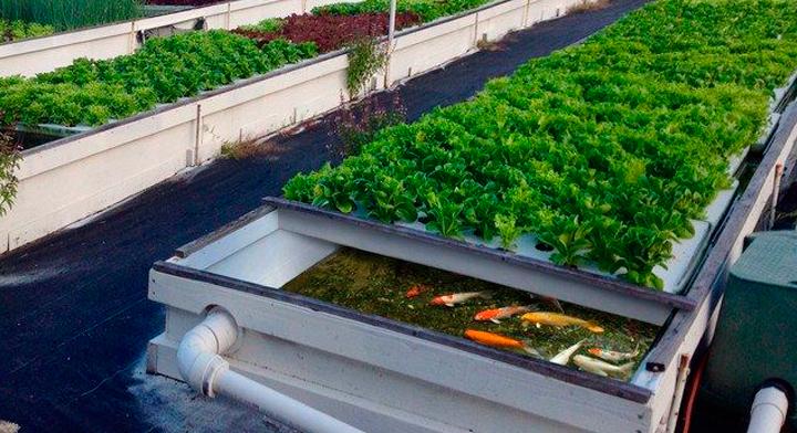 El reto: una agricultura sustentable, productiva e inclusiva