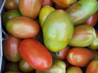 Venta de tomates bugalú