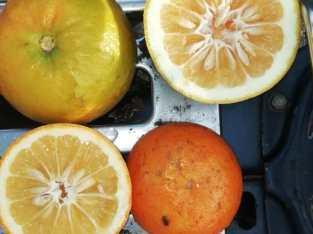 Venta de naranjas agria