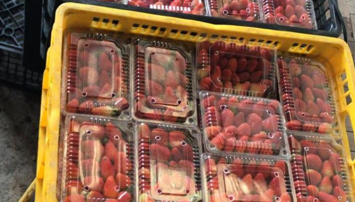 Fresas empacadas y congeladas
