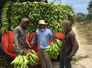 Plátanos de primera