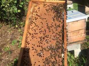 Panales de abeja