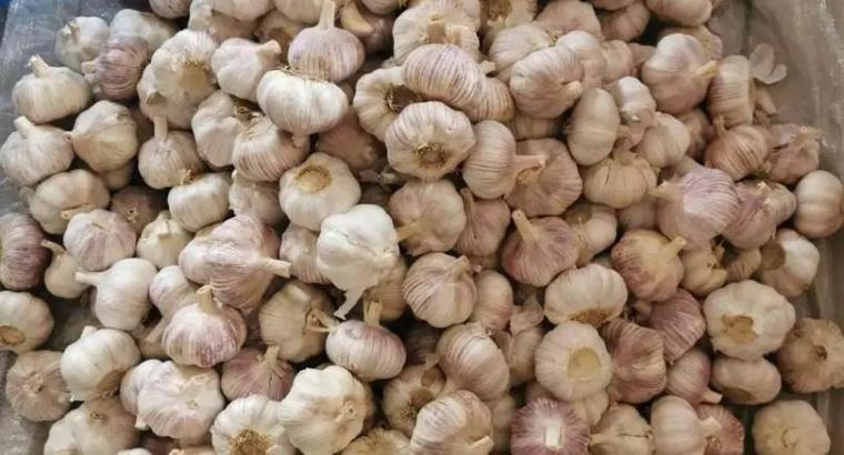 Chinese garlic offer