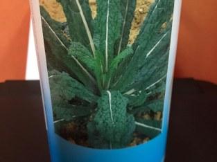 Semillas de kale