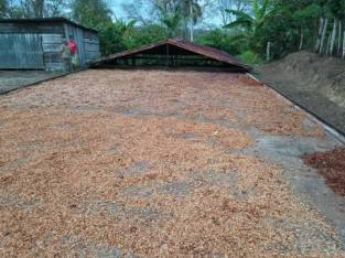 Finca de cacao orgánico de 1,250 tarea con casa y secadero y río