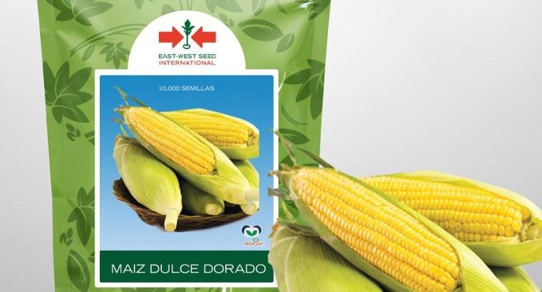 Semillas maiz dulce Dorado F1