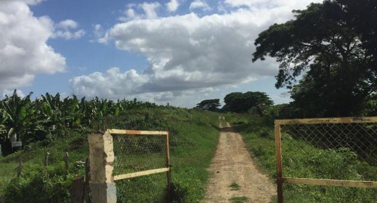 FINCA DE GUINEO EN PRODUCCIÓN DE VENTA EN MONTE CRISTI