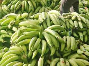 Plátanos por camiones