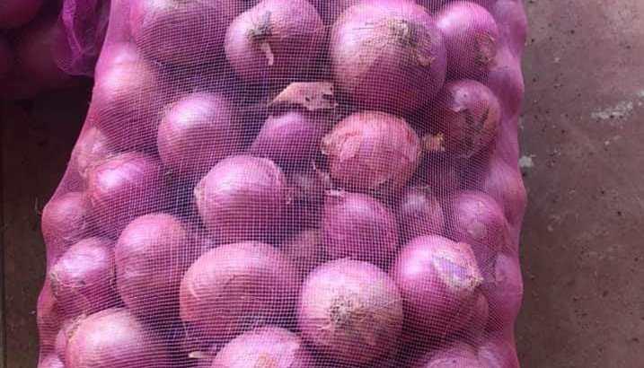 Cebolla roja criolla