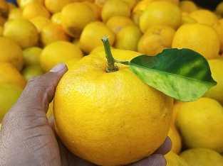 Naranjas agrias exportables
