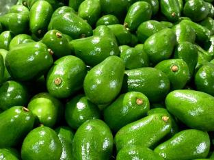 Aguacates exportables