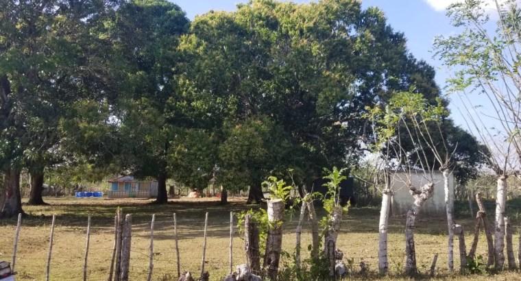 FINCA EN BAYAGUANA, MONTE PLATA