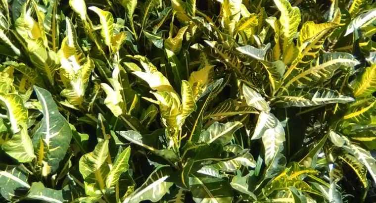 Plantas ornamentales y ajíes picante