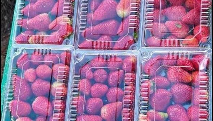 Fresas empacadas