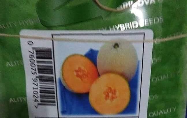 Semillas de melón
