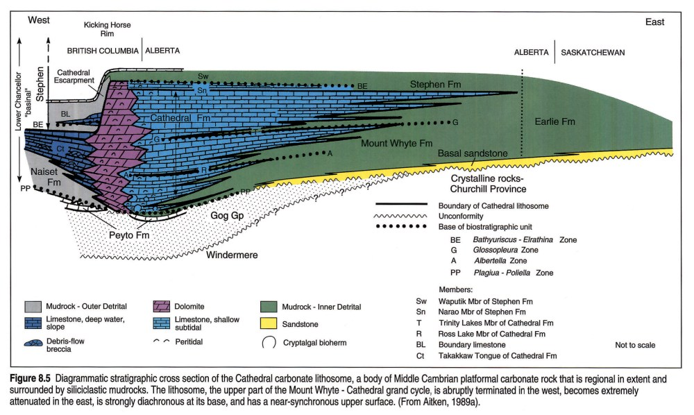 medium resolution of westward the carbonate abruptly changes facies to basinal limestone and shale of the chancellor formation