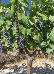 Denominacion de origen La Rioja