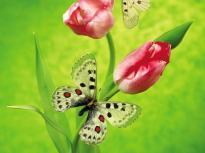 borboleta-4107