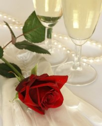 champagnerose