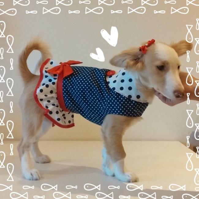 moda canina roupa boutique do cão diy handmade portugal flamvet vestidos cão
